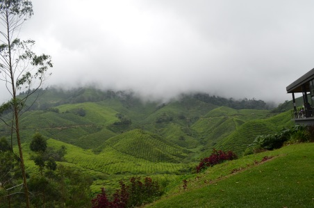 A teeny bit of the huge Boh tea plantations